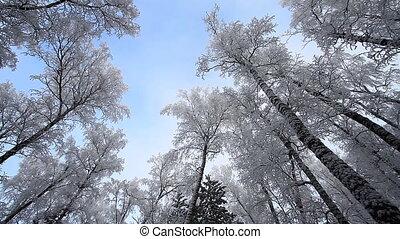 25, de scène van de winter
