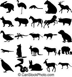 25, ensemble, animals.