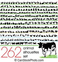 262, animal, siluetas, conjunto
