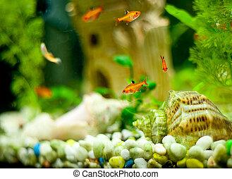 2UTE, 很少,  fish, 水族館