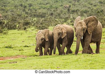 3, アフリカの象, 動きで
