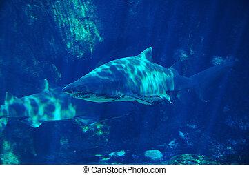 #3, サメ, 斑点を付けること