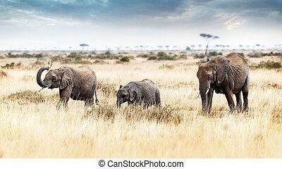 3, 象, 歩くこと, 中に, kenya, アフリカ