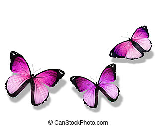 3, 隔離された, 背景, すみれ, 白, 蝶