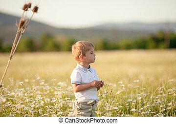 3-5, enfant, collects, naturel, pâquerettes, fleurir, années, printemps, champ