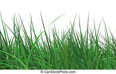 grass - 3 backgrounds of fresh spring green grass Isolated...