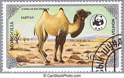 3, chameau