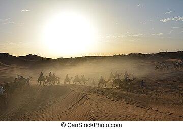 3, chameau, trekking