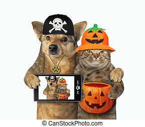 3, chien, chat, halloween, étreint