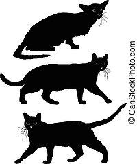 3, conjunto, gato