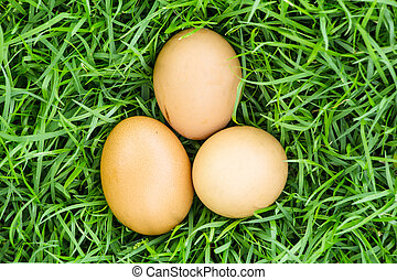 3 Egg on green grass