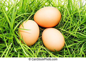 3 eggs on green grass.