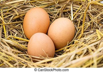 3 eggs on straw