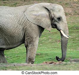 3, elefant