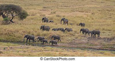 3, flock, Elefanter