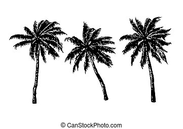 3 hand-drawn palms - 3 hand-drawn palm trees on white...