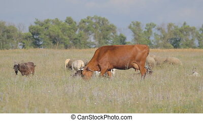3 IN 1 EDIT Large and small cattle