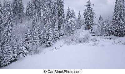 3 in 1 video with different speeds. Aerial view on the coniferous forest in the mountains in winter. Clear frosty weather
