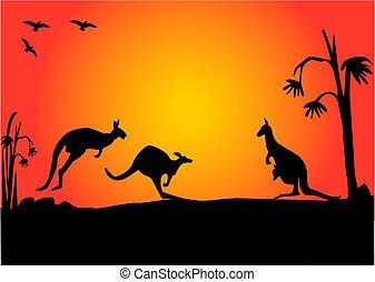 three australian kangaroos hopping in the sunset