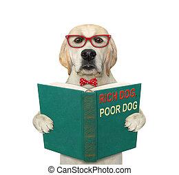 3, leva piedi, aperto, cane, libro