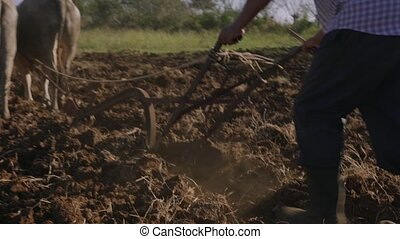 3-Man Farmer Cultivating Land Plowing The Soil With Ox -...