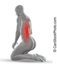 3, manlig, medicinsk, figur, med, skelett, in, knäande, ställning