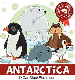 3, part., tiere, von, antarctica.
