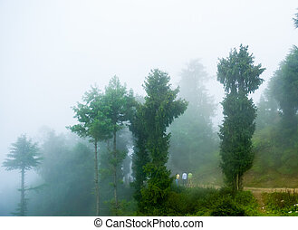 3 people roaming on a montain path in fog