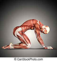 3, render, av, a, manlig, medicinsk, figur, in, knäande, ställning
