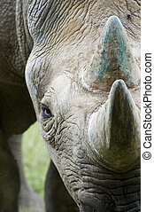 3, rinoceronte