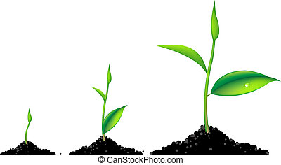 3 Sprouts, Green Young Plant Life Process, Isolated On White Background, Vector Illustration