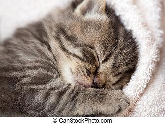 3, wochen, eingeschlafen, baby, kã¤tzchen