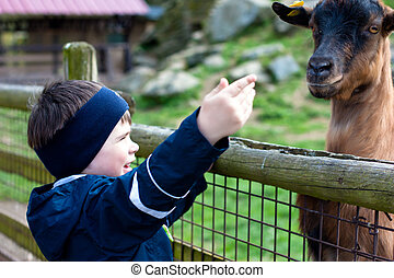 3 years  boy feeding a goat