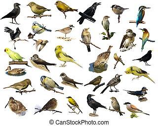 (35), hvid, fugle, isoleret