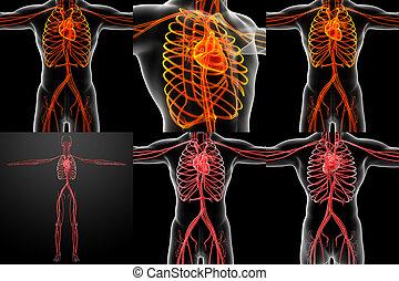 3d, übertragung, abbildung, von, der, vaskuläres system