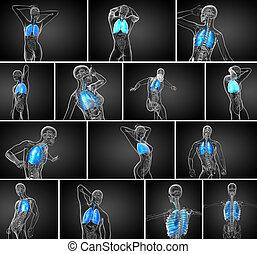 3d, übertragung, medizinische abbildung, von, der, menschliche , atmungssystem