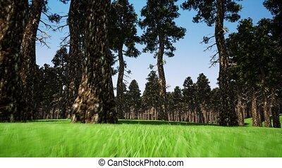 3d, лес, ботаника, метраж, реалистический