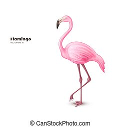 3d, フラミンゴ, 現実的, ピンク, ベクトル