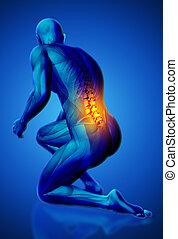 3d, マレ, 医学, 数字, ∥で∥, より低い, 脊柱, ハイライトした, 中に, ひざまずく, ポジション