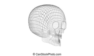 3D 4k wireframe human skull - isolated on white background