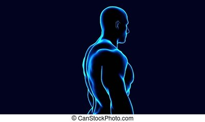 3d animated male body anatomy spinning on black background -...