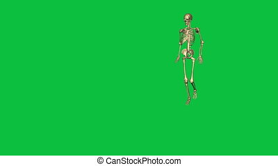 skeleton accident damage right leg - separate on green ...