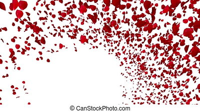 3d animation red rose petals flying with vortex on white background, love and valentine day concept