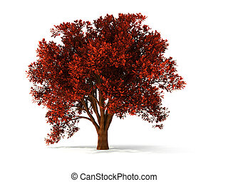 3d autumnal tree - isolated autumnal tree with red foliage
