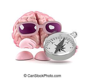 3d Brain directions