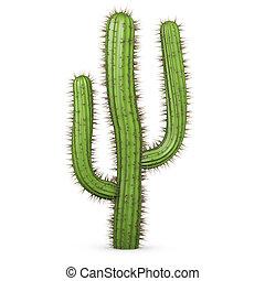 3d, cactus