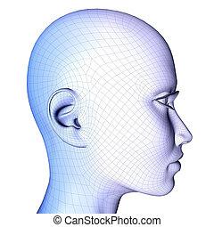 3d, cara femenina, wireframe