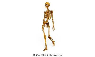 3D CG rendering of skeleton