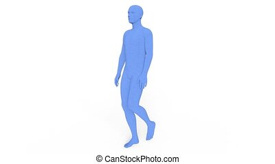 3D CG rendering of wire frame male