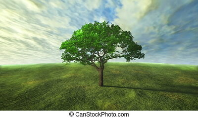 3D cloud and tree time lapse with green concept